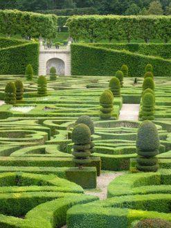 Schloss Villandry: der Garten. Foto: Hilke Maunder