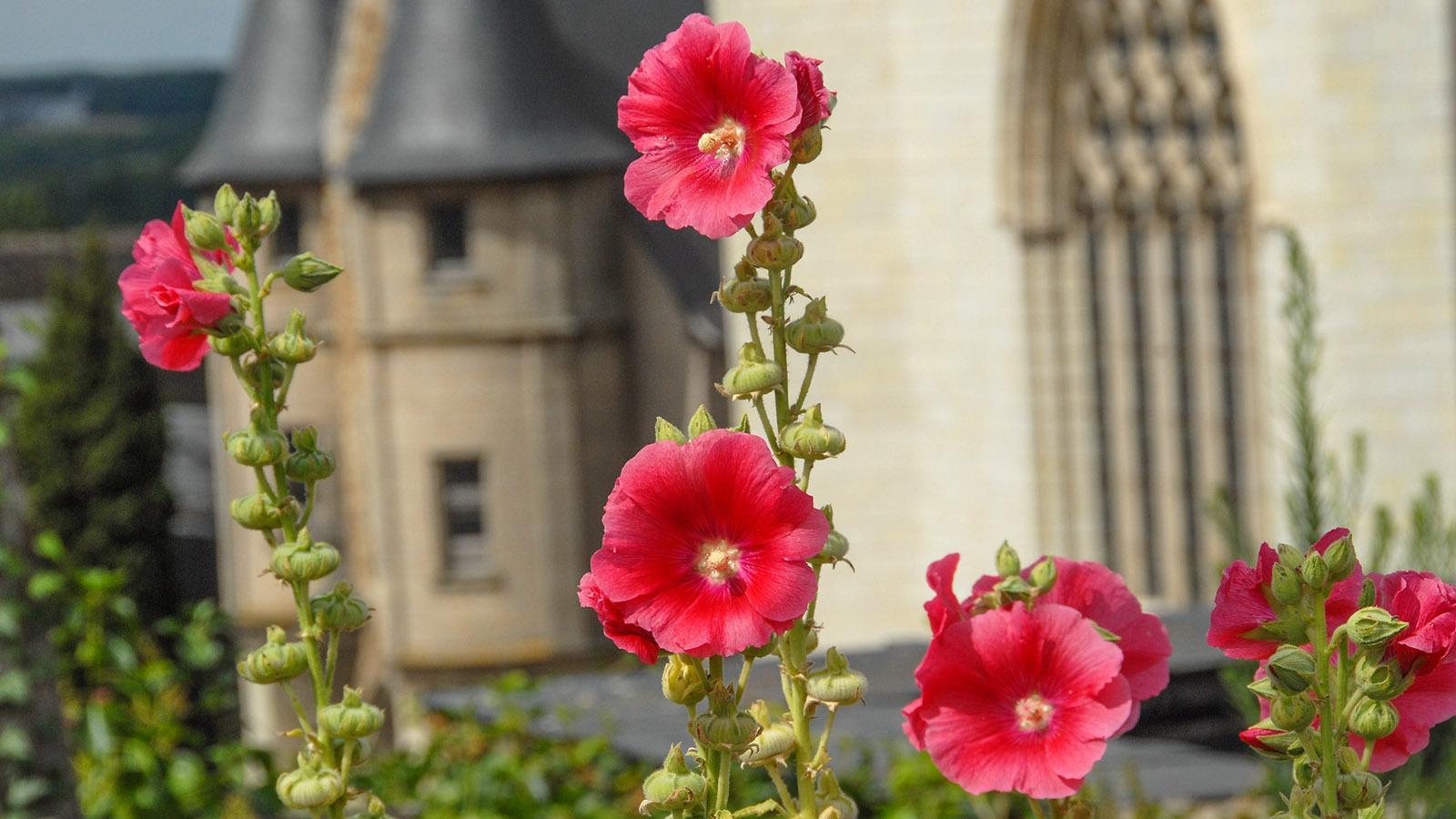 Angers: Im Sommer bezaubert der Schlossgarten mit seiner Blütenpracht. Foto: Hilke Maunder