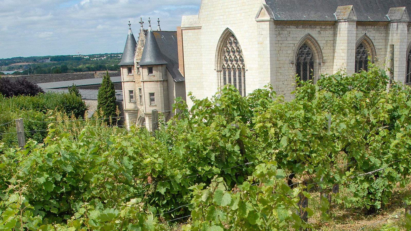 Auch Wein ließ König René in seinem Kuchengarten anpflanzen. Foto: Hilke Maunder
