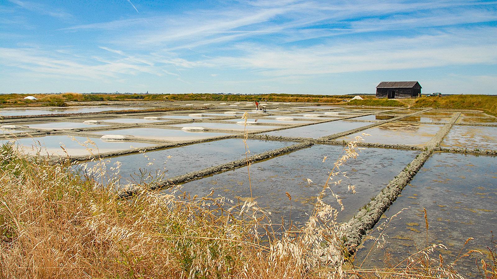 Die Salzgärten zwischen Guérande und Batz-sur-Mer. Foto: Hilke Maunder
