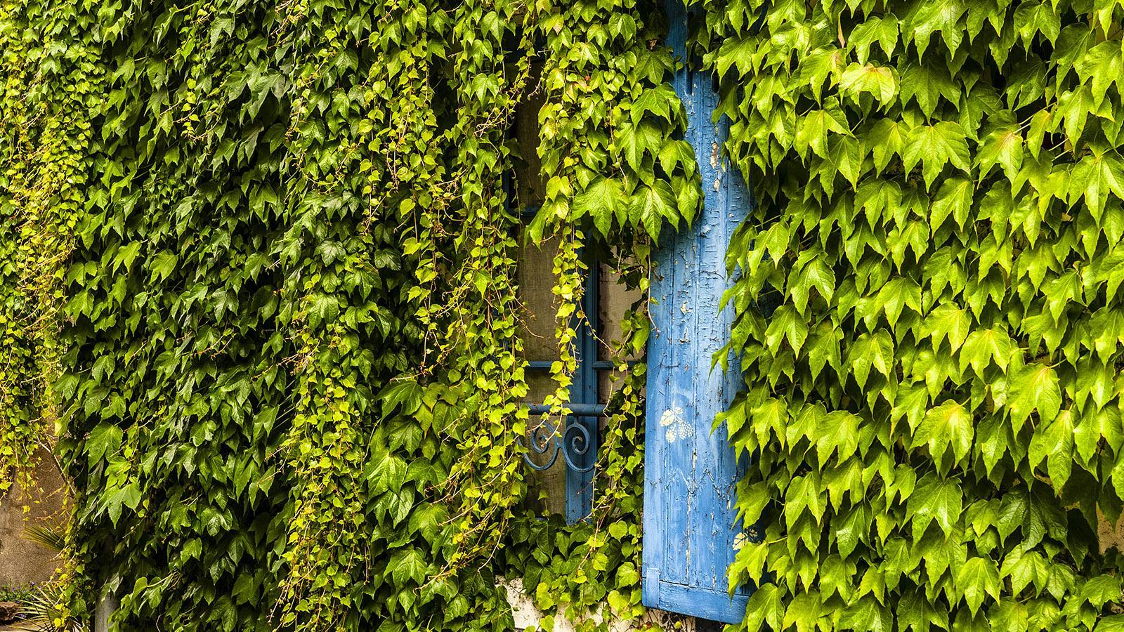 Nantes: Trentemoult - von Efeu bedeckt... Foto: Hilke Maunder