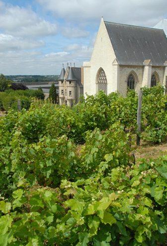 F/Maine-et-Loire/Angers: Schloss von König René, Weingarten