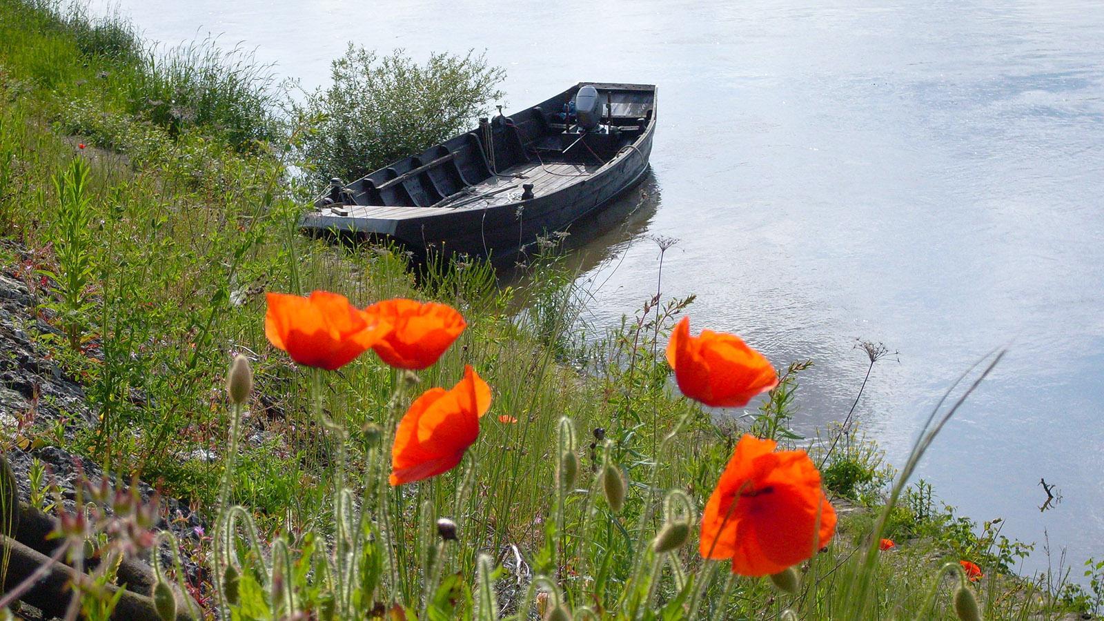 Die Loire bei Bréhémont. Foto: Hilke Maunder