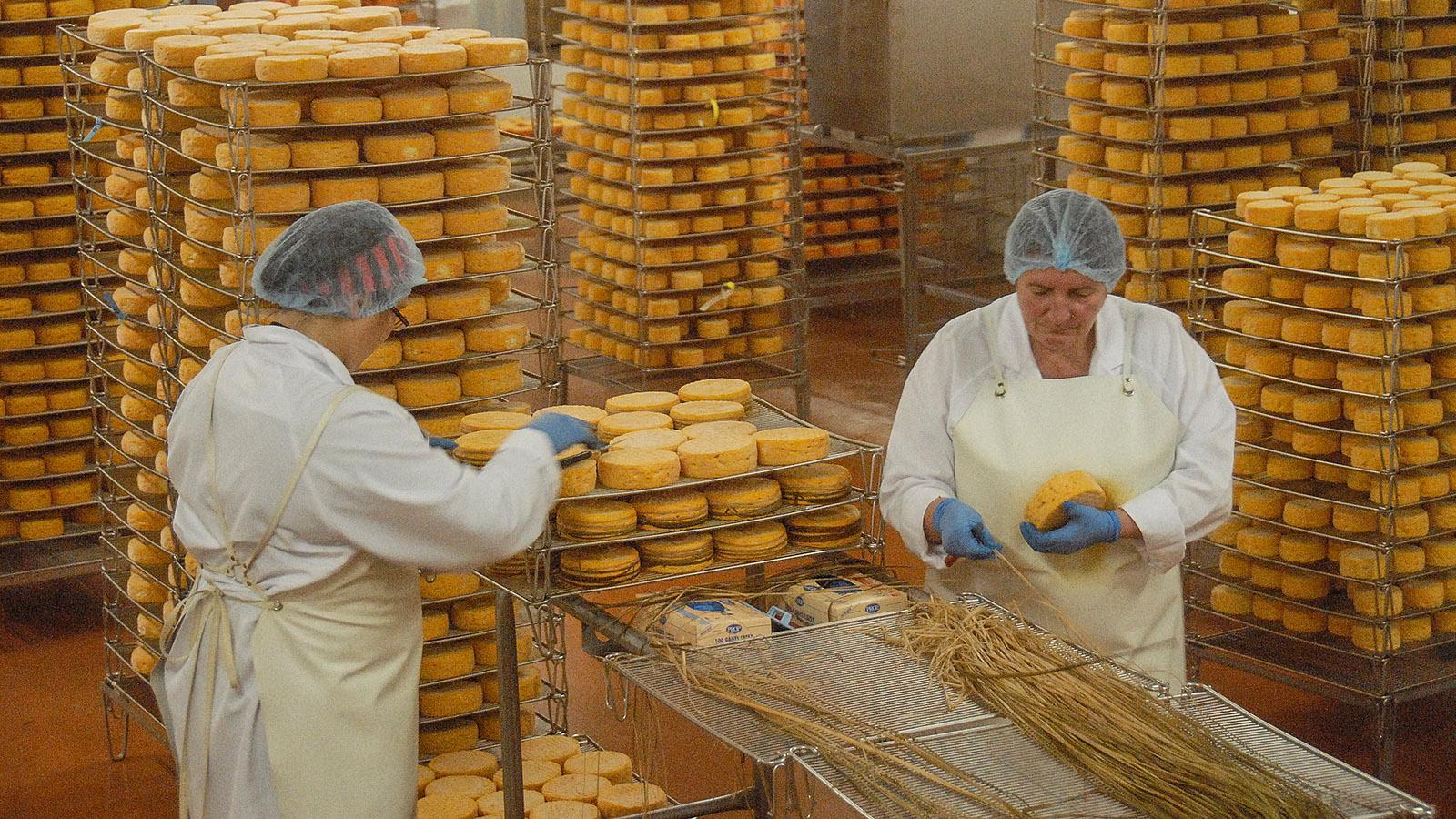 """Produktion des AOC """"Livarot"""" bei Graindorge. Foto: Hilke Maunder"""