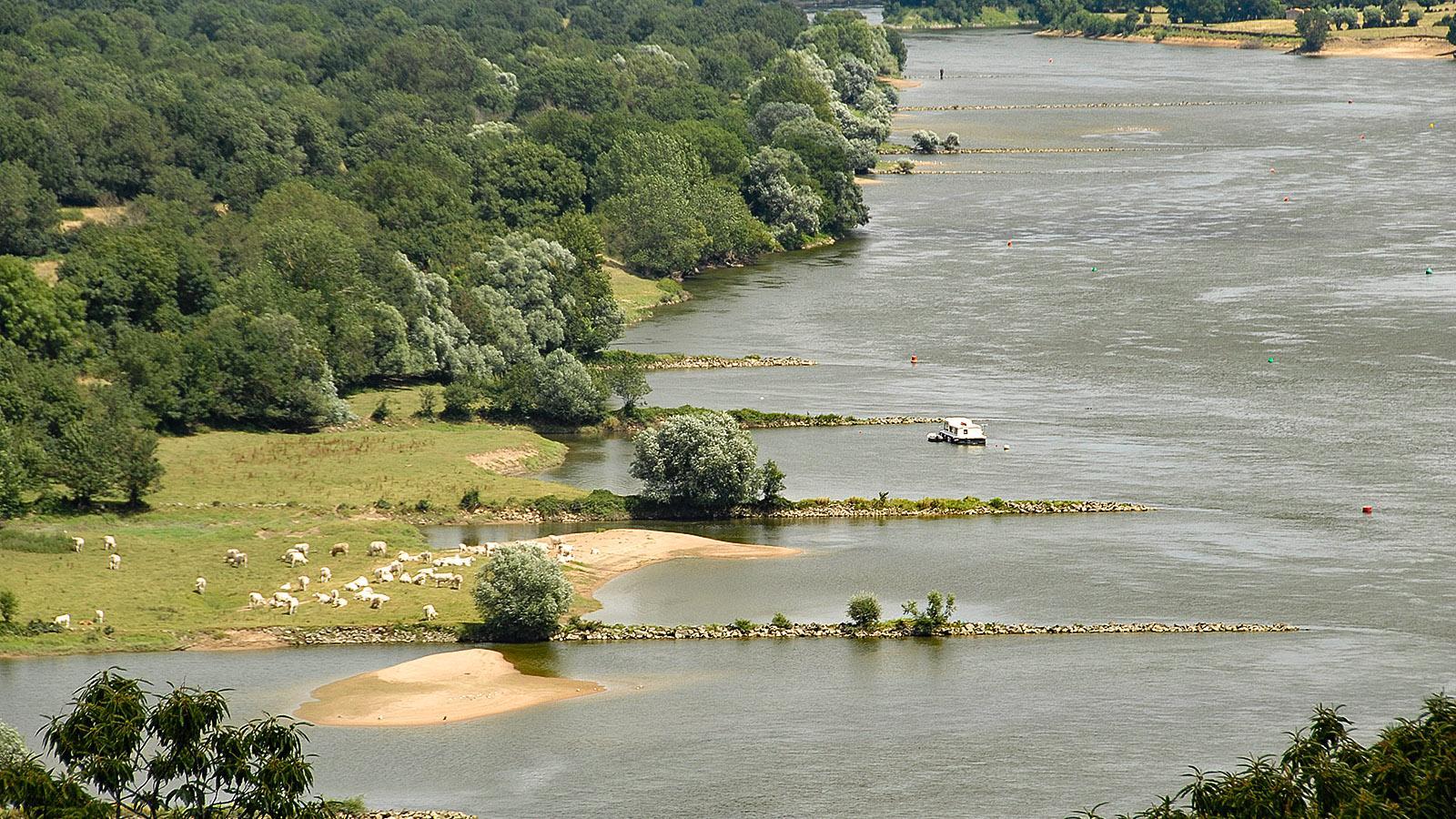 Champtoceaux: Loire-Panorama. Foto: Hilke Maunder
