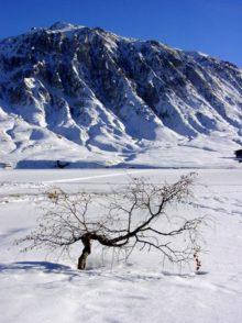 F/Savoie/Tignes-Le-Lac: Baum im zugefrorenen See.