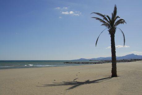Roussillon_Saint-Cyrien_Strand_Palme_ credits_Hilke Maunder