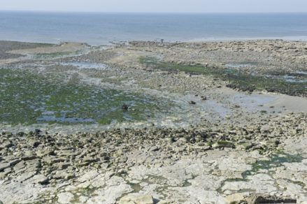 F/Nord-Pas de F/Nord-Pas de Calais: C™te d'Opale bei Wimmereux
