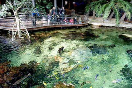 Opalküste_Boulogne_Aquarium_Nausicáa_ccredits_Hilke Maunder