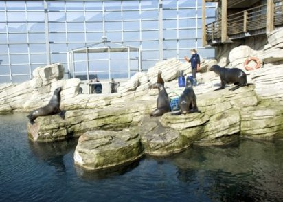 Opalküste_Boulogne_Aquarium_Nausicáa_Robben_credits_Hilke Maunder
