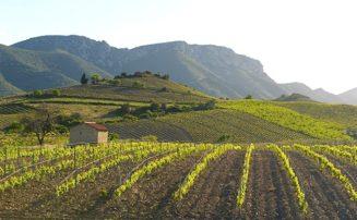 Pyrenées_Orientales_Val d'Agly_Rebgärten_Wein