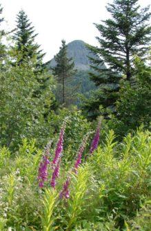 Ardèche_parc-naturel-rc3a9gional-des-monts-dardc3a8che_Ardèche_Monts d'Ardèche_2©Hilke Maunder