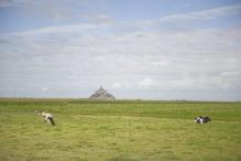 Mont Saint-Michel_Weide_Klosterberg_Kühe_©Hilke Maunder