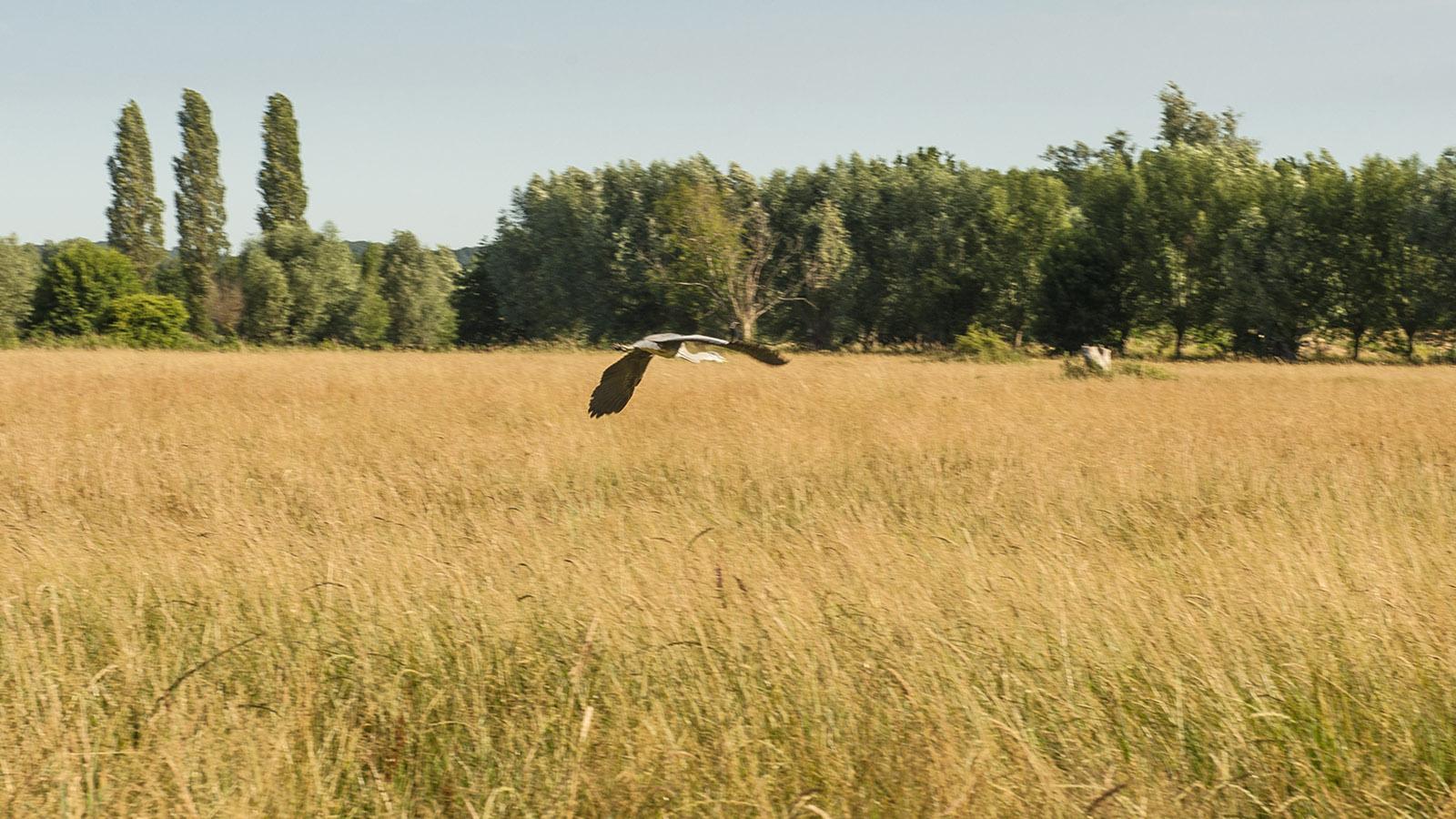 St-Martin-de-Boscherville: Storch. Foto: Hilke Maunder