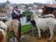 Sylvain Dumontel mit seinen Tieren bei der Pottok Feria in Espelette. Foto: Hilke Maunder