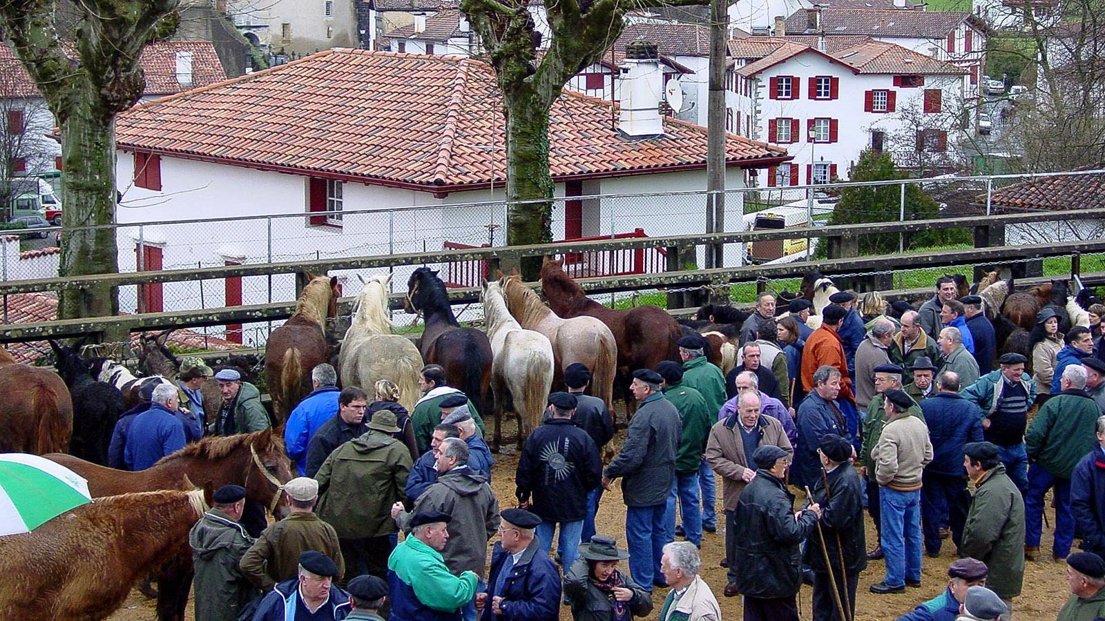 Bei der Pottoka Feria wird um die robusten Kleinpferde fachmännisch gefeilscht. Foto: Hilke Maunder