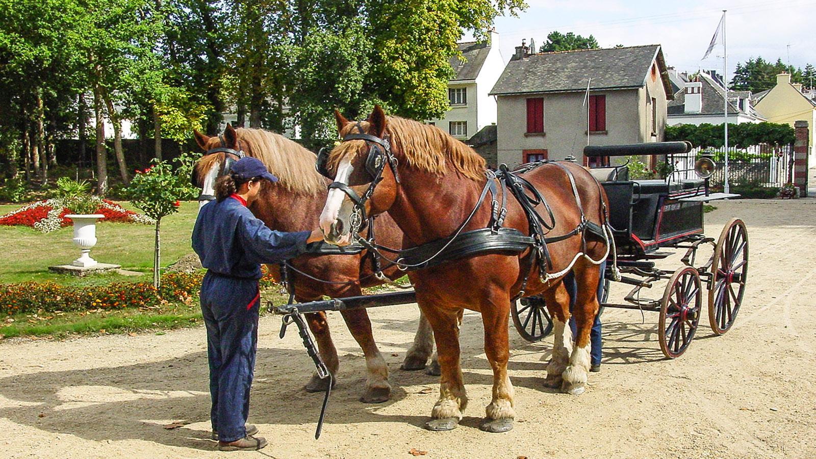Hennebont: Hengste des Landesgestüts werden vor eine Kutsche gespannt. Foto: Hilke Maunder