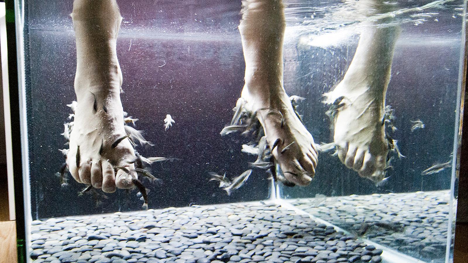 Pariser Passagen. Bei ZZZ Zen - Le Bar à Sieste in der Passage Courseul knabbern kleine Fische eure Hornhaut an den Füßen fort. Es kitzelt ein wenig! Foto: Hilke Maunder