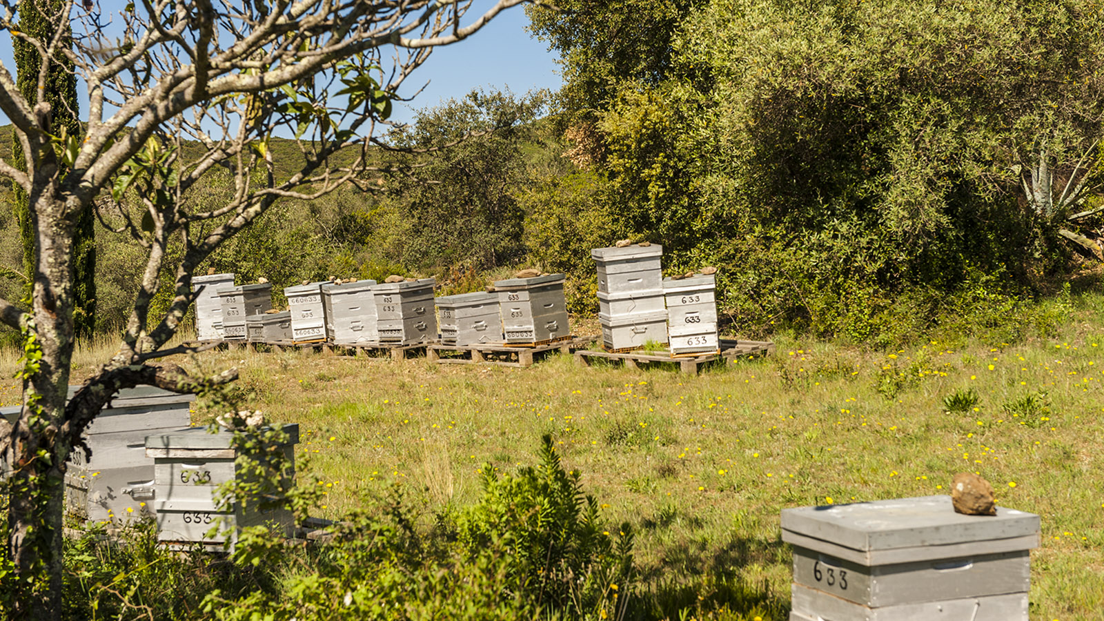 Unterwegs beim Wandern entdeckt: lauter Bienenkörbe. Foto: Hilke Maunder