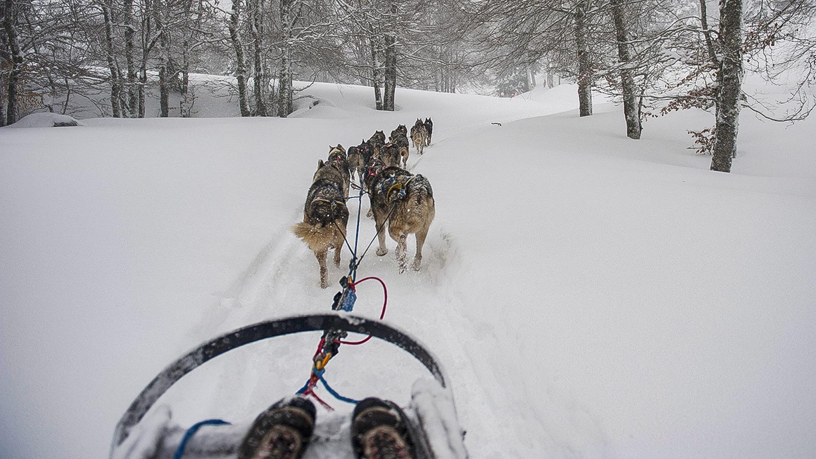 Barèges: im Hundeschlitten durch den Winterwald. Foto: Hilke Maunder