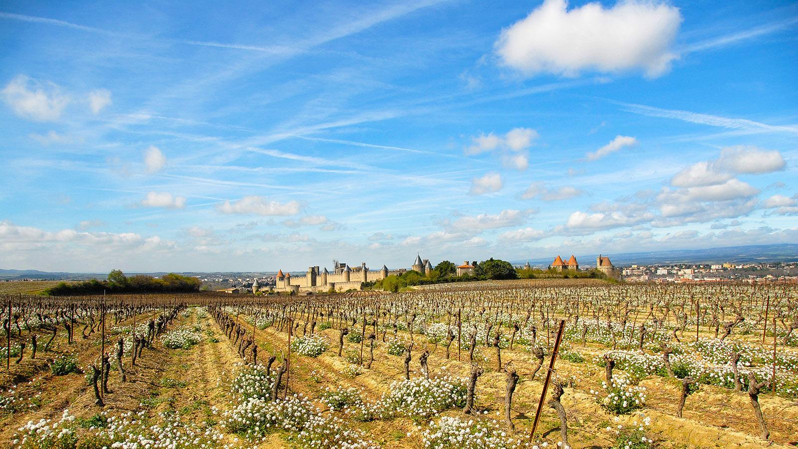 Auch aus der Ferne beeindruckend: die Cité von Carcassonne.Foto: Hilke Maunder