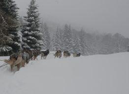 Pyrenäen_Bareges_Plateau de Lienz_Hundeschlitten_3©Hilke Maunder
