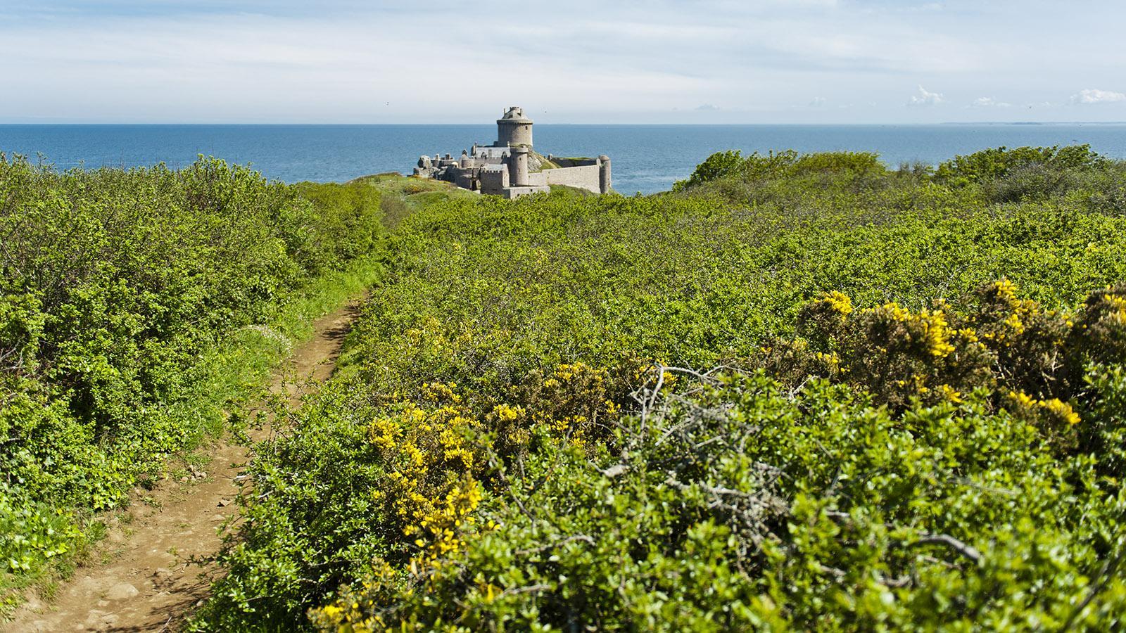 Eingebettet in wildes Grün und gelb blühenden Ginster: das Fort La Latte an der GR 34. Foto: Hilke Maunder