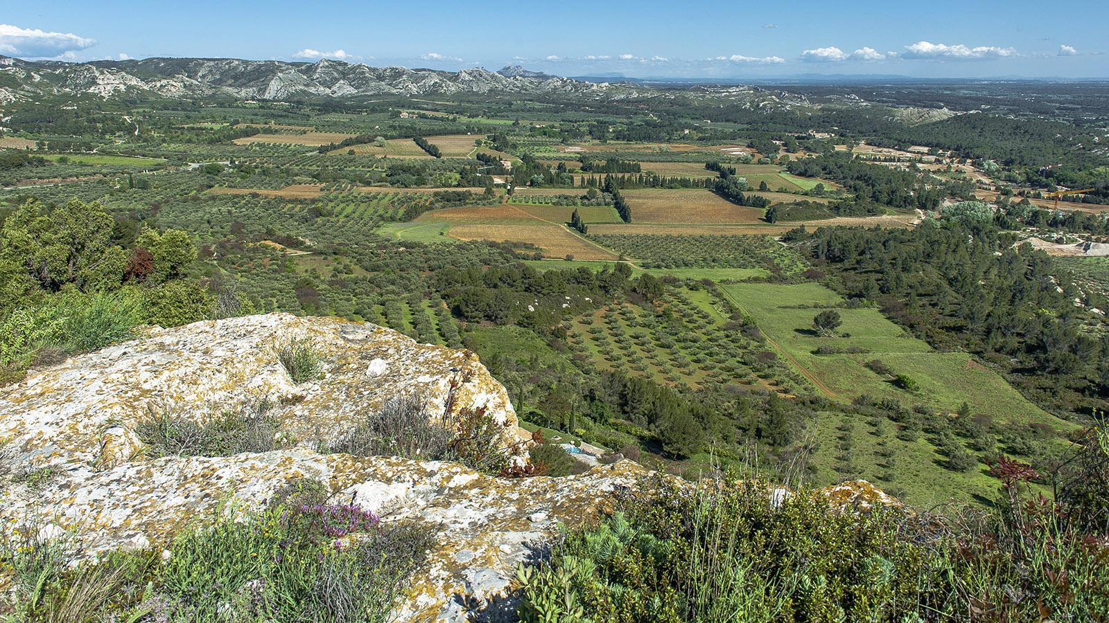 Unterhalb von Les Baux-de-Provence erstrecken sich die besten Olivenhaine der Provence. Foto: Hilke Maunder