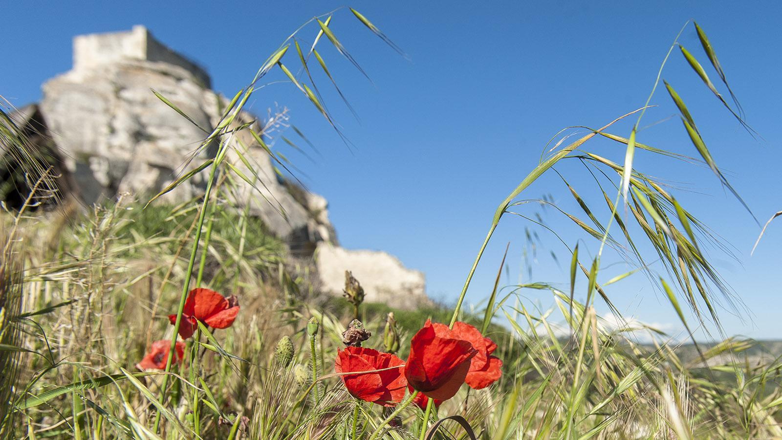 Les Baux-de-Provence: Blick auf die Burg. Foto: Hilke Maunder