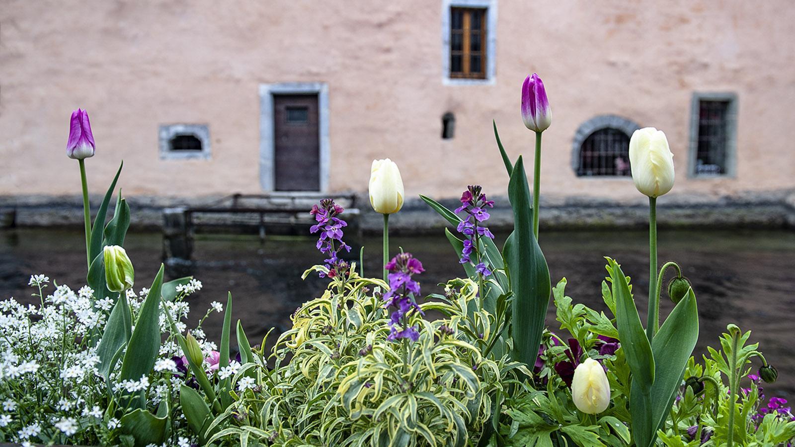 Sonntagsmarkt von Annecy: Die Kanäle sind mit Blumen geschmückt. Foto: Hilke Maunder