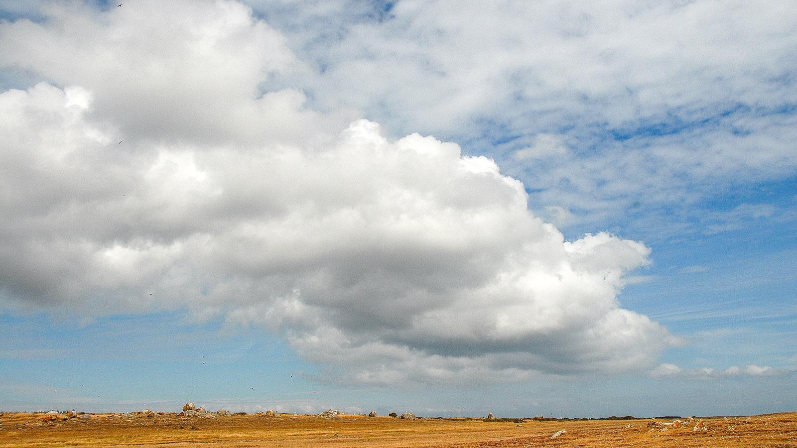 Île d'Yeu: Landschaft bei der Côte Sauvage. Foto: Hilke Maunder