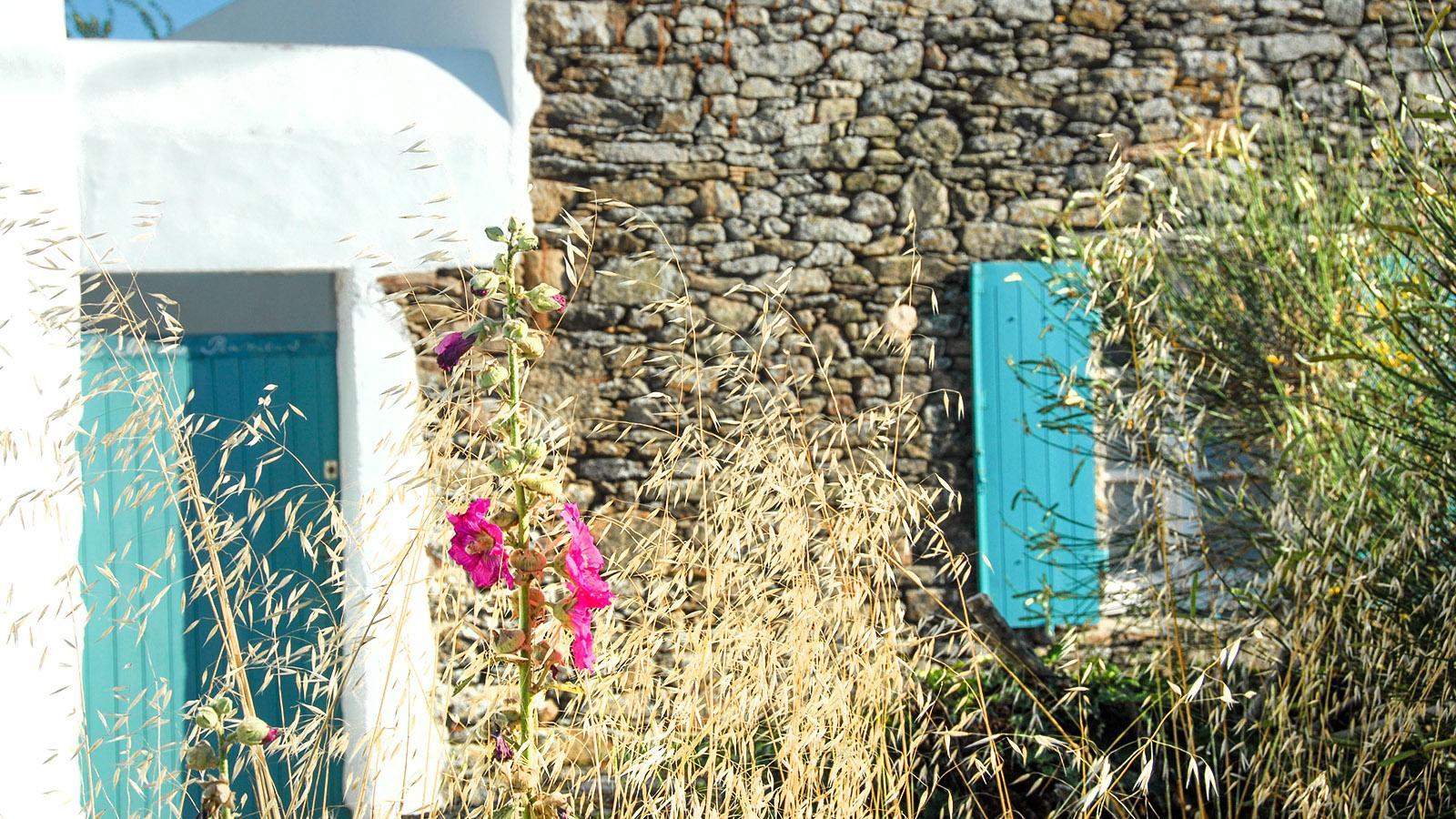 Île d'Yeu: bei Ker Mercier. Foto. Hilke Maunder