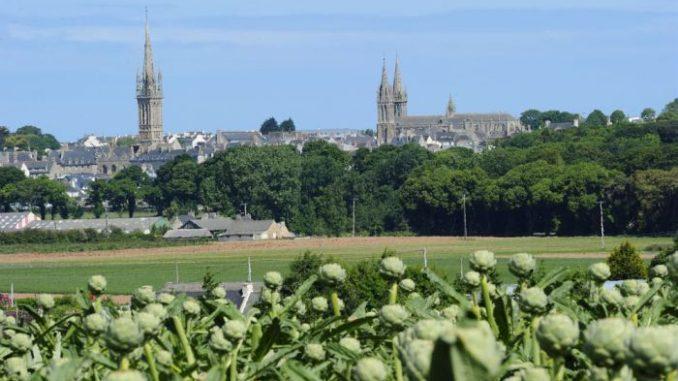 Gemüse-Garten Nordbretagne. Artischockenfeld bei St-Pol-de-Léonn. Foto: Yannick Le Gal/CRT Bretagne (Pressebild)