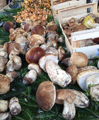 Provence_Nizza_Marché aux Fleurs_Pilze_1_©Hilke Maunder