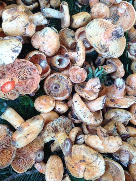 Provence_Nizza_Marché aux Fleurs_Pilze_4_©Hilke Maunder