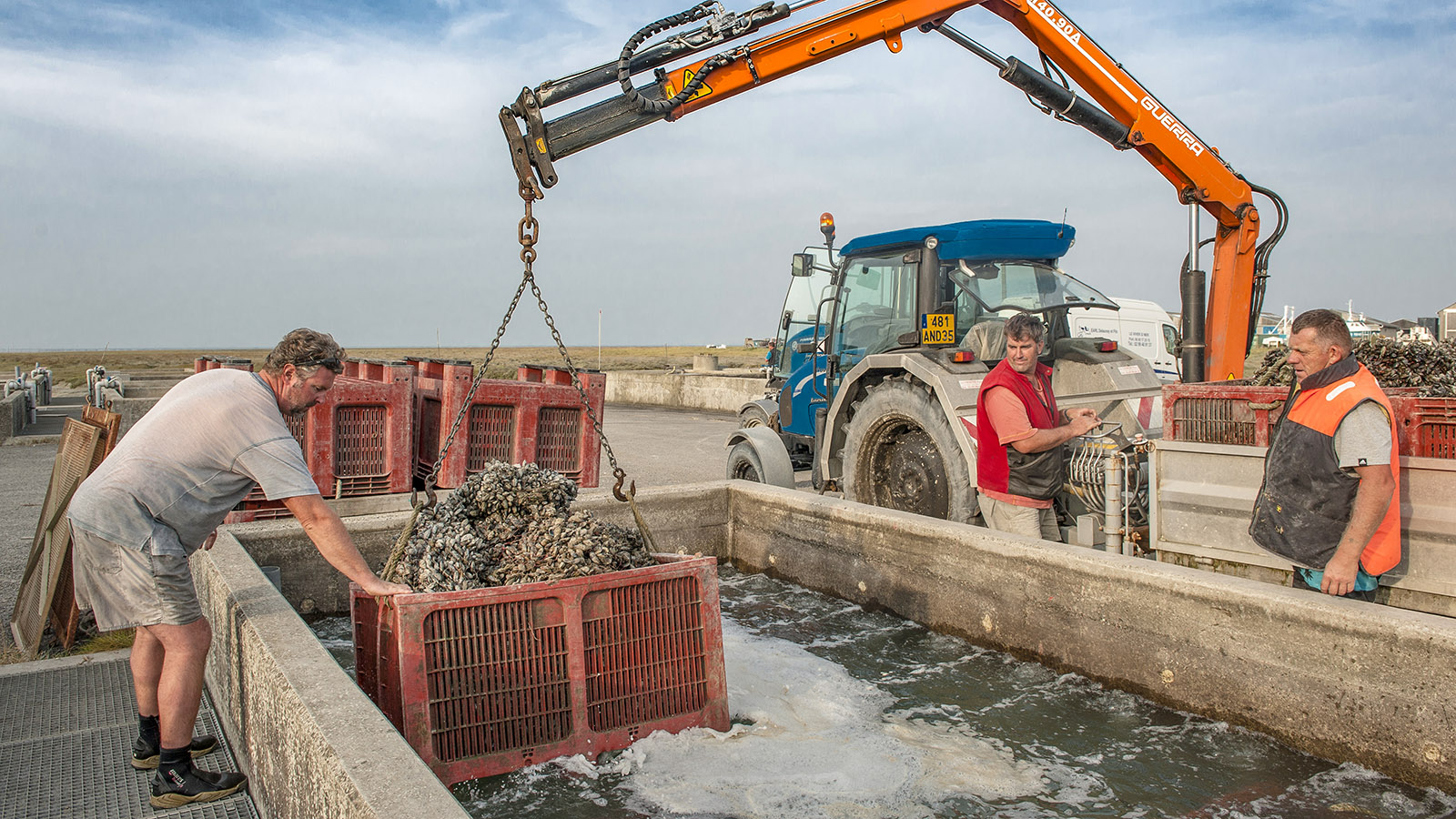 Moules de Bouchot: Die köstliche Fracht aus dem Meer wird in den Becken der Kooperative von Saint-Hirel gewässert. Foto: Hilke Maunder