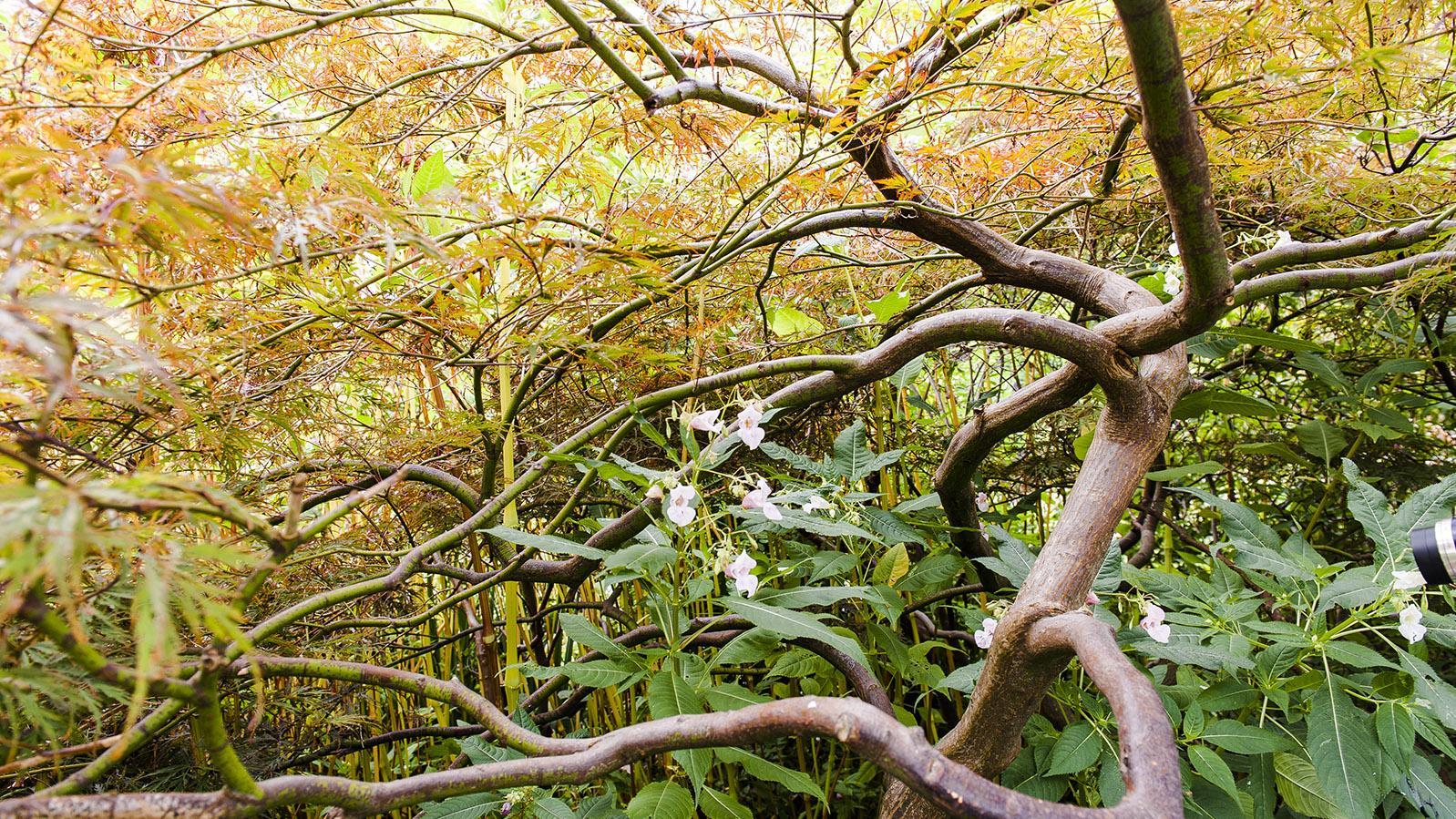 Der Garten von Monet im Herbst. Foto: Hilke Maunder