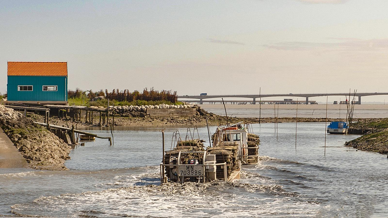 Île d'Oléron: Ein Austernfischer verlässt den Hafen von Saint-Trojan-les-Bains. Foto: Hilke Maunder