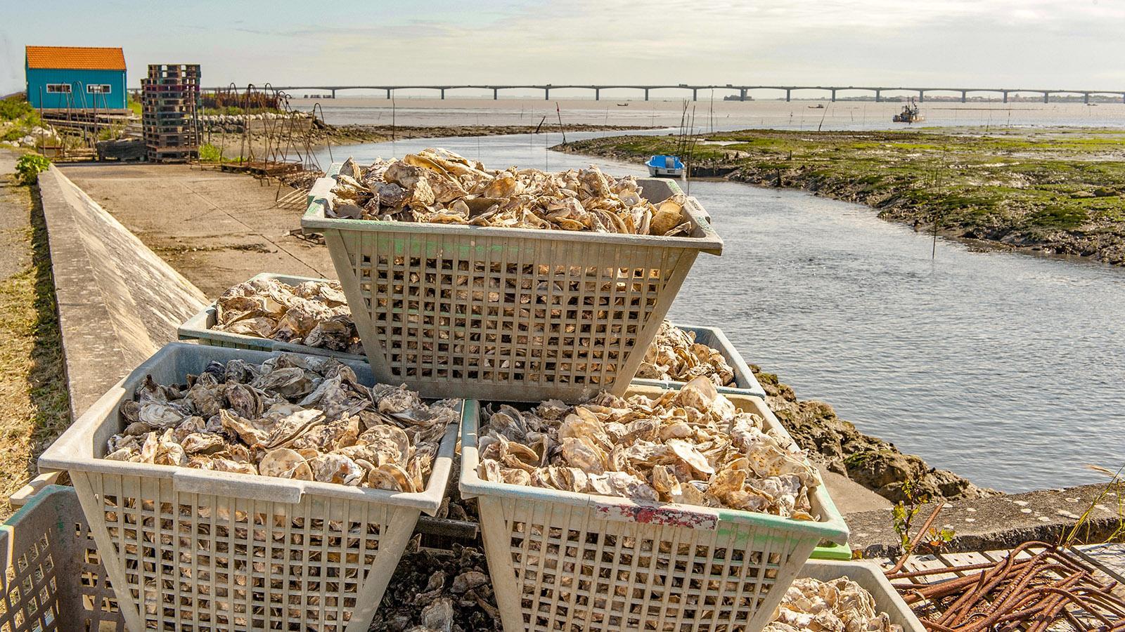 Île d'Oléron: Die Austern von der Insel sind hervorragend! Foto: Hilke Maunder