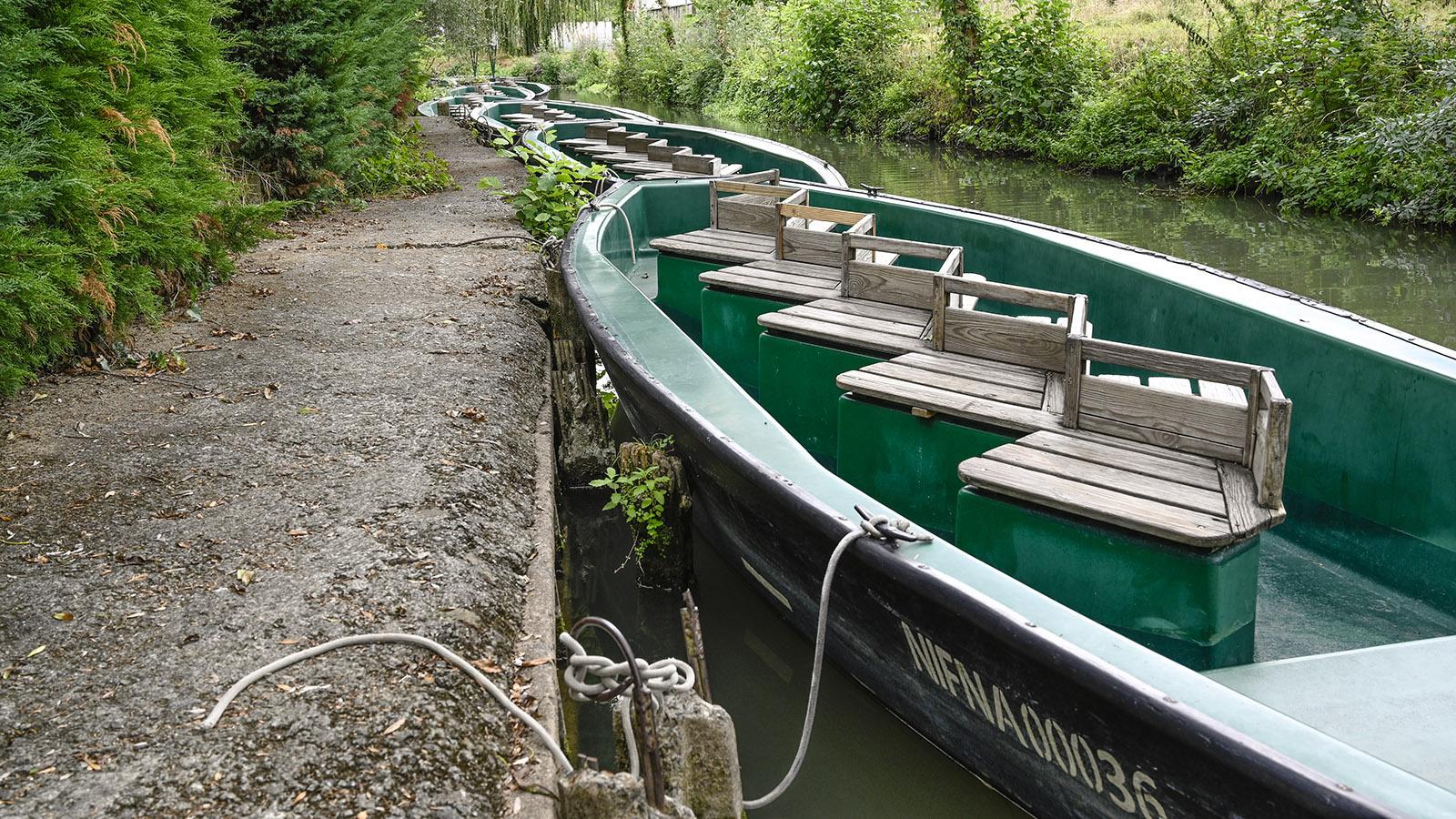 Mit solchen Booten geht es durch den Marais Poitevin. Diese hier sind am Anleger von La Repentie de Magné vertäut. Foto: Hilke Maunder
