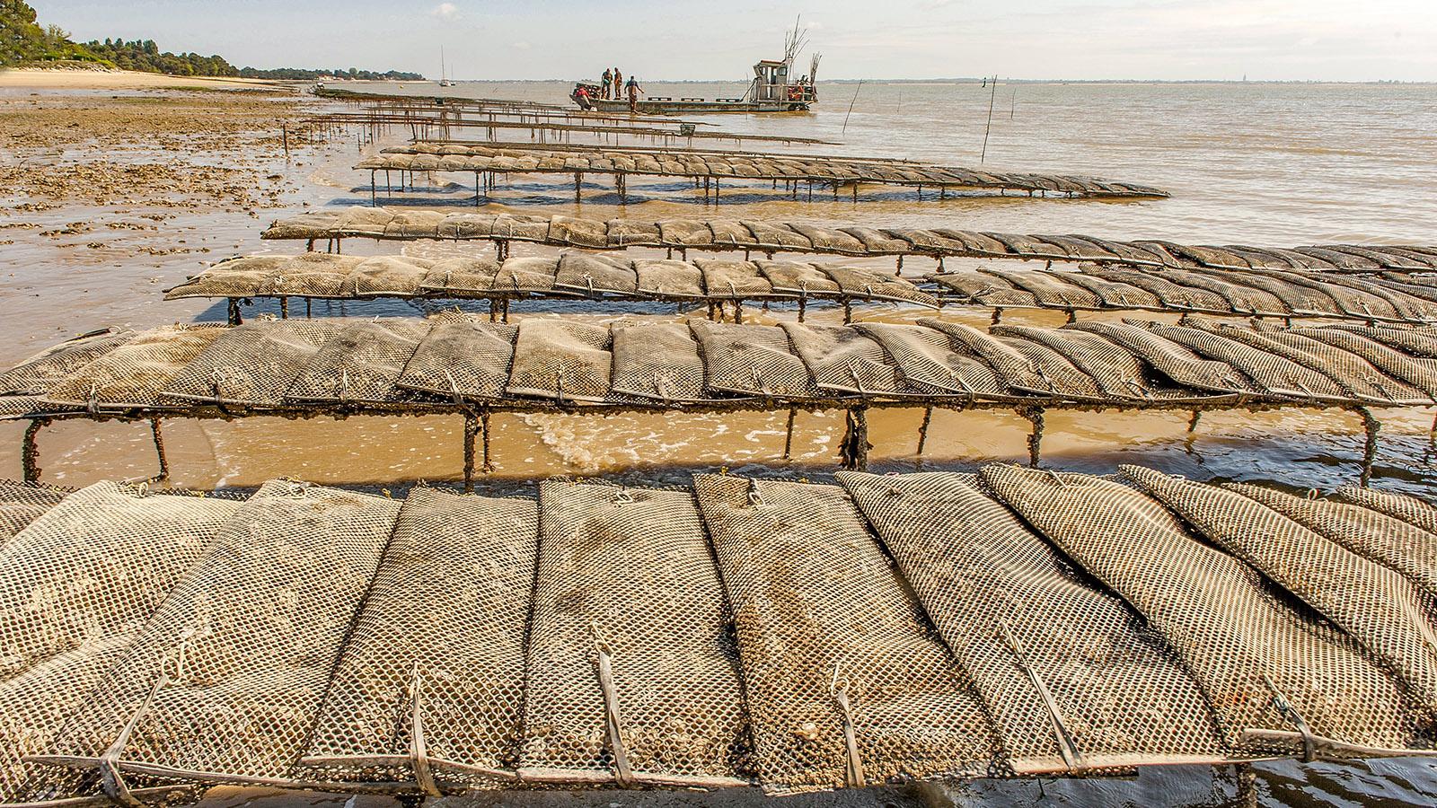 Île d'Oléron: Reiche Ernte: Frisch geerntete Austern an der Plage Gatseau. Foto: Hilke Maunder