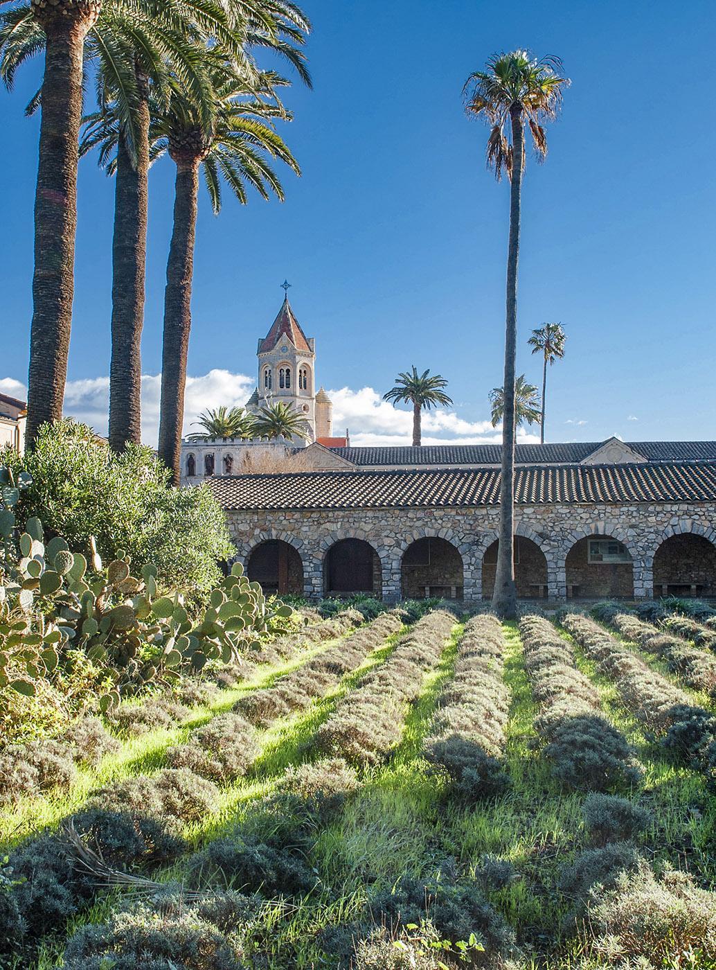 Die Lavendelfelder der Abtei auf Saint-Honorat. Foto: Hilke Maunder