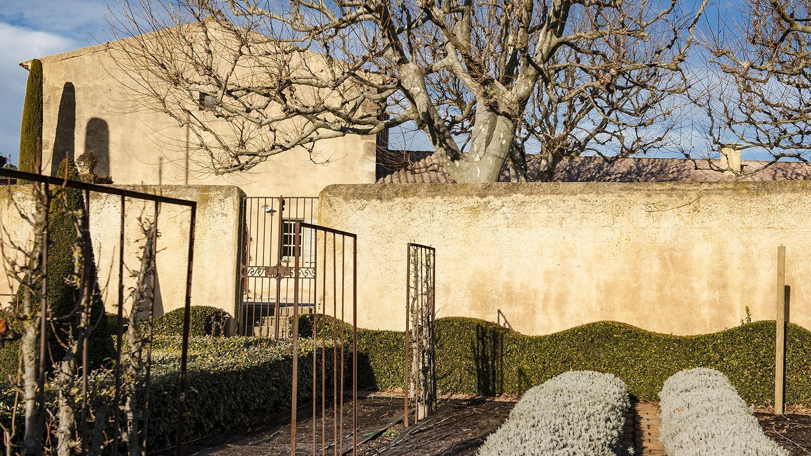 Der Garten des Weinguts Val Joanis im Winter. Foto: Hilke Maunder