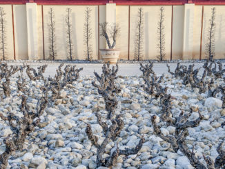 Weingut Val Joanis im Winter. Foto: Hilke Maunder