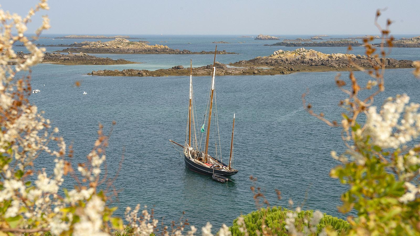 Die Bisquine La Cancalaise vor den Îles Chausey. Foto: Hilke Maunder