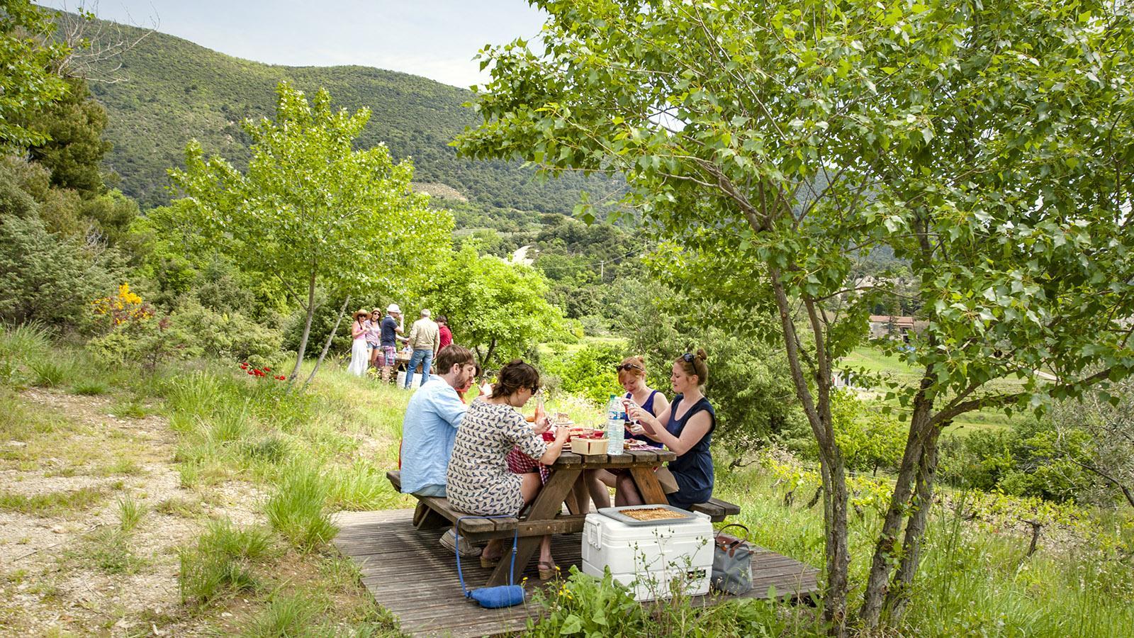 Domaine Rocheville: Picknick zwischen Oliven und Wein. Foto: Hilke Maunder