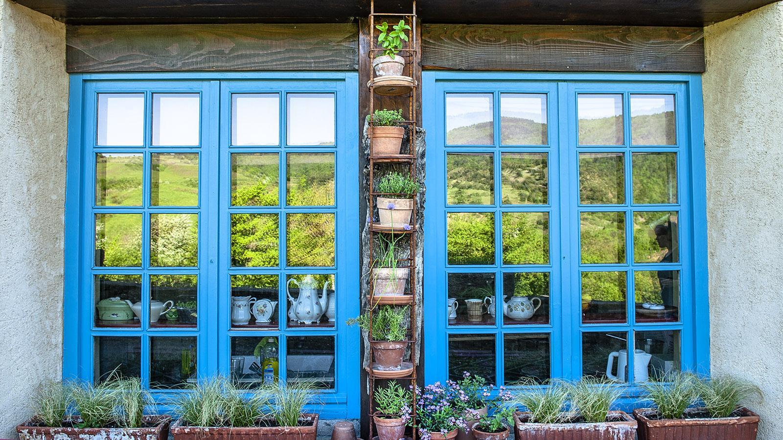 Bugarach: Blumentöpfe, kunstvoll arrangiert zwischen den Fensterrahmen. Foto: Hilke Maunder