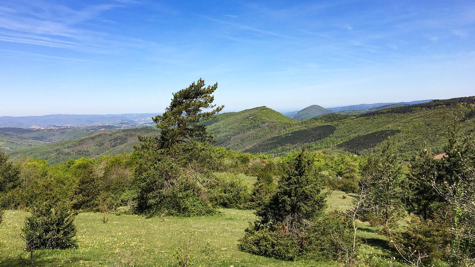 Pech de Bugarach: Im Frühjahr ist diese Bergwiese übersät mit Schlüsselblumen. Foto: Hilke Maunder