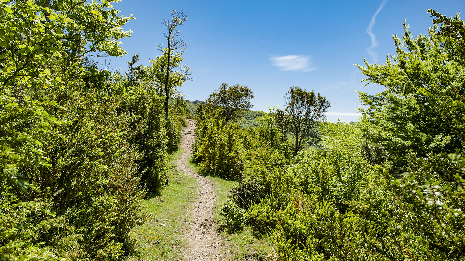 Pech de Bugarach sieht flach aus, steigt aber merklich an –unser Wanderweg. Foto: Hilke Maunder