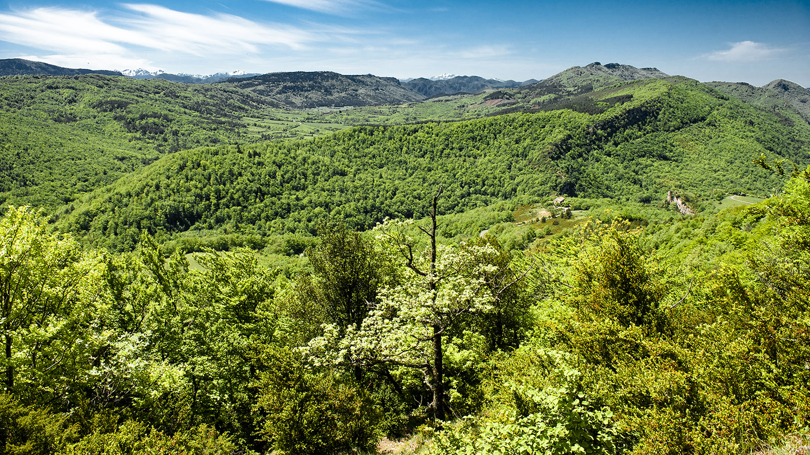 Pech de Bugarach: Weitblick über die Corbières bis zu den Bergspitzen der Pyrenäen. Foto: Hilke Maunder